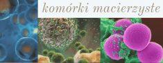 Komórki macierzyste to wieczność – potężna pomoc dla organizmu